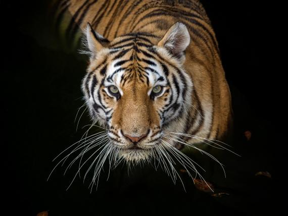 Tikkurila запускает новую коллекцию, посвященную исчезающим видам животных